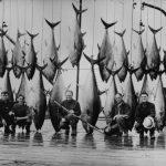 Michael-Lerner-tuan-fishing-nova-scotia-wedgeport