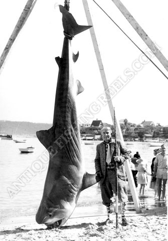Zane Grey - Tiger Shark - Australia