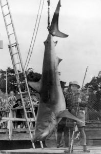 errol-bullen-atalanta-reel-shark-australia-reel-fishing